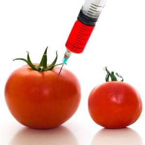 GMO foods - not the best high protein foods